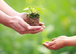 giving sapling