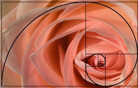 fibonacci-rose